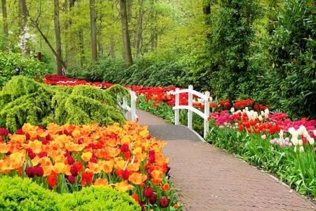 springtime and flowers